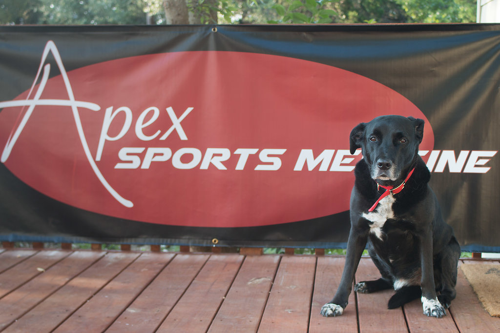 Andy the dog in front of Apex Sports Medicine banner